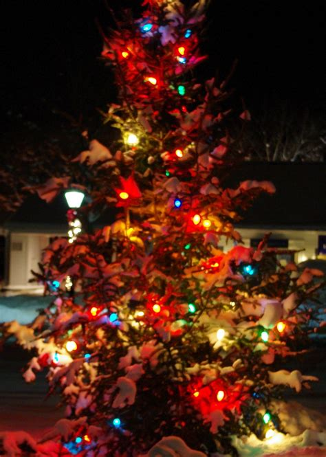 xmas tree lighting orange ct tree shop orange ct image home garden and tree rtecx