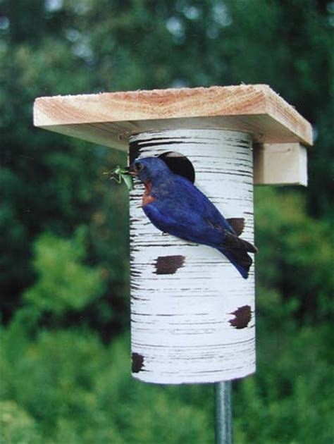 gilbertson bluebird nest box the backyard naturalist