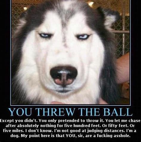 Dog Jokes Meme - too funny husky dog funny husky pinterest funny