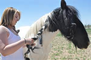 Breeding mare horse related keywords amp suggestions mule breeding