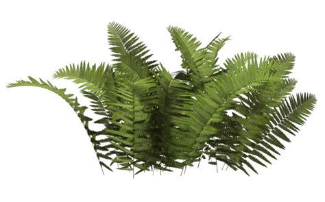 plan background png bushes png images free bush png