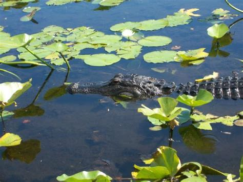 boat supply store orlando guide to kissimmee outdoors travel guide on tripadvisor