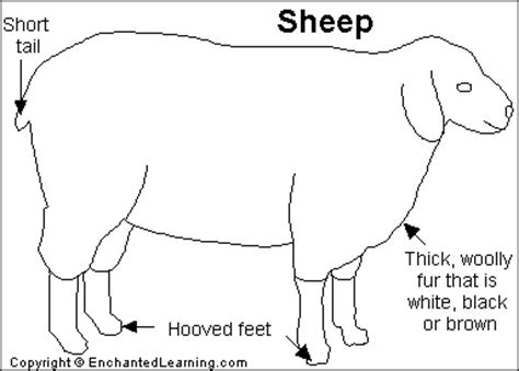 sheep diagram sheep printout enchantedlearning