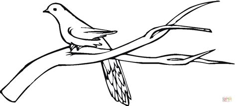 coloring pages tree branches pigeon stands on branch coloring online super coloring