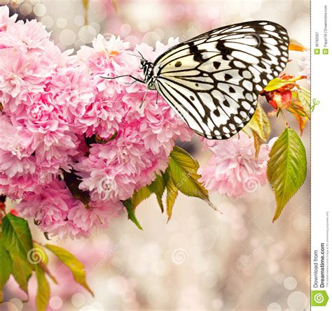 abbeville floral wallpaper pink natural pink cherry blossoms stock image image of botanical
