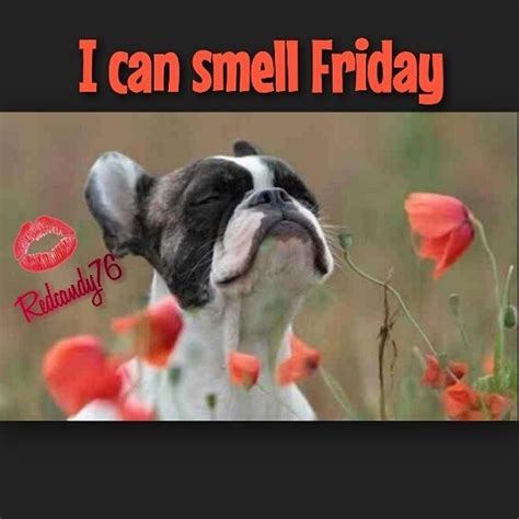 smell friday pictures   images  facebook tumblr pinterest  twitter