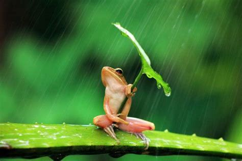 Ooh Rainy Day!   Life with Tranquility !