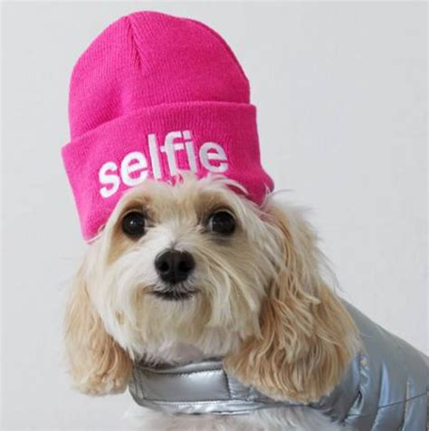 puppy to american eagle outfitters rolling out fashion to increase sales
