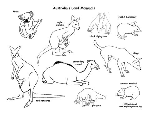 Coloring Page Australian Animals | australian animals coloring pages printable coloring page