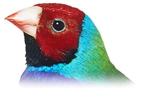 what do cracker beak birds eat bird beaks different types of beaks dk find out
