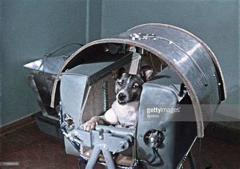 laika the best of news getty images