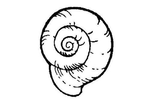 snail coloring pages animal pictures for kids