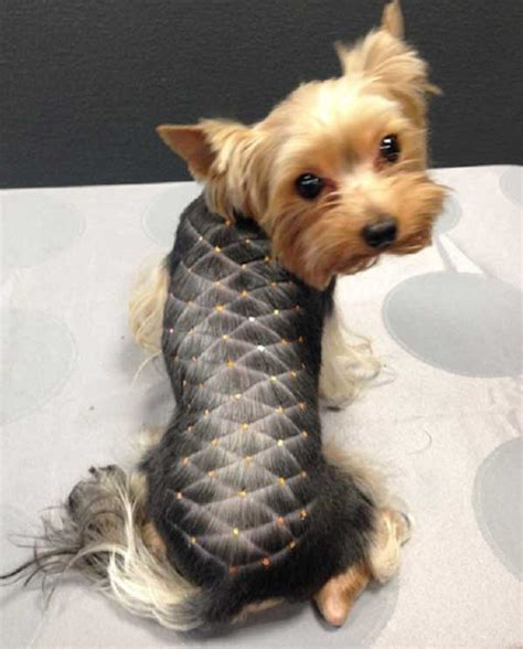 best brush for yorkies yorkie haircuts 100 terrier hairstyles pictures yorkiemag
