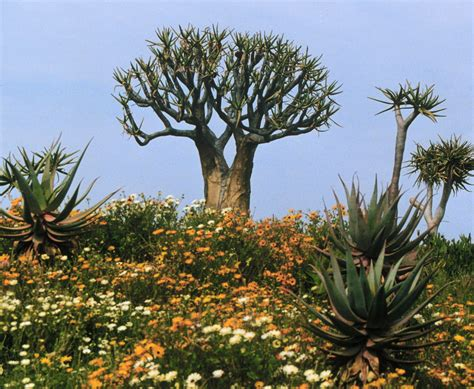 images of plants why are there so many kinds of plants biology online blog