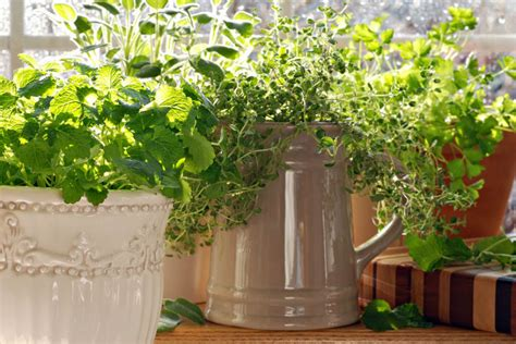 growing an herb garden indoors growing an indoor herb garden unlock food