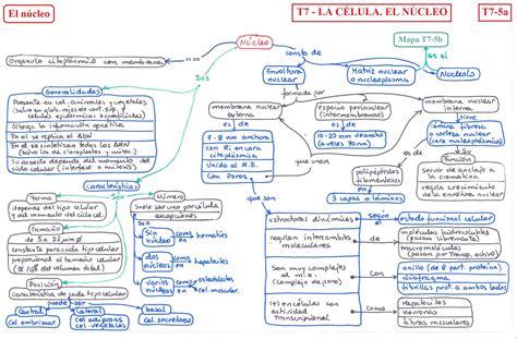 pics photos imagen tomada funciones nucleo ecro clelula t07 la c 233 lula el n 250 cleo b 183 i 183 o 183 l 183 o 183 g 183 i 183 a 2 186 b 183 a 183 c