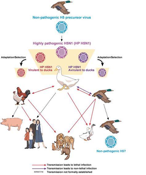 cara membuat replika virus influenza cara penularan dan patogenesa avian influenza berbagi