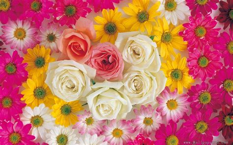 Flower Wallpaper To Download | rose flowers wallpapers free download
