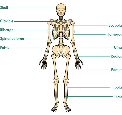 these are the bones that i want for my bathroom i love the bones understanding macmillan cancer support