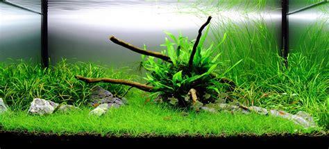 Plant Aquarium Design   Interiors Design.info