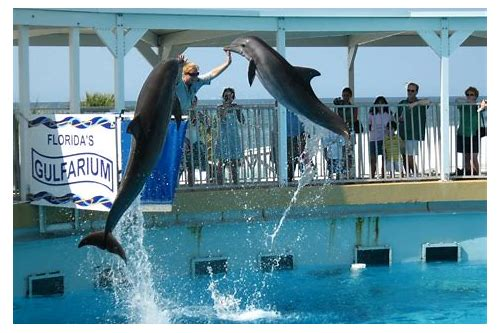destin fl coupons