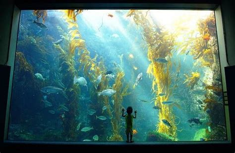 aquarium design san diego 128 best images about aquariums and terrariums on