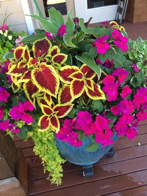 Coleus Planter by Colorful Coleus Planter