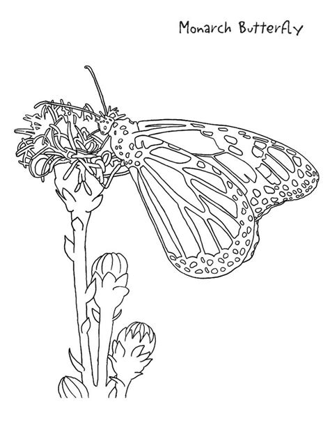 coloring page for monarch butterfly monarch butterfly coloring pages coloring home