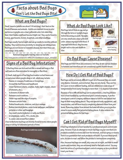 information about bed bugs bed bug facts bed bug 28 images how long do bed bug