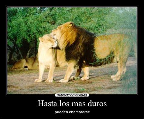 imagenes de leones con frases cristianas leones con frases imagui