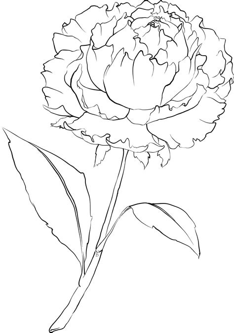 flower background coloring page beccy s place october 2011