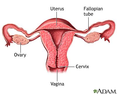 Uterine Adhesions After C Section by Asherman