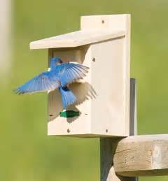 building bluebird boxes fairhope farm