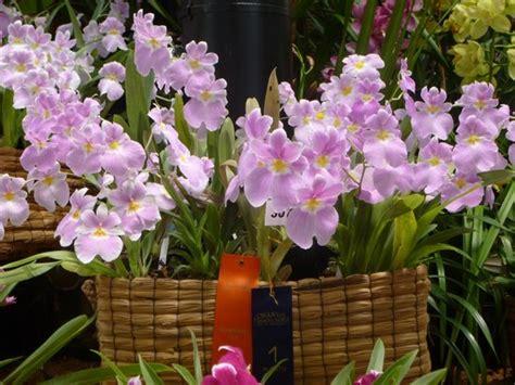 imagenes de jardines con orquideas m 225 s orqu 237 deas fotograf 237 a de jardin botanico de medellin