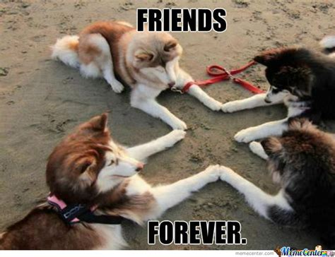 Friends Forever Meme - best friends forever very funny best friends meme picture