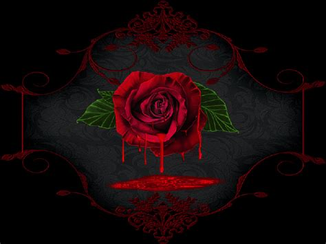 bloody rose wallpaper wallpapersafari