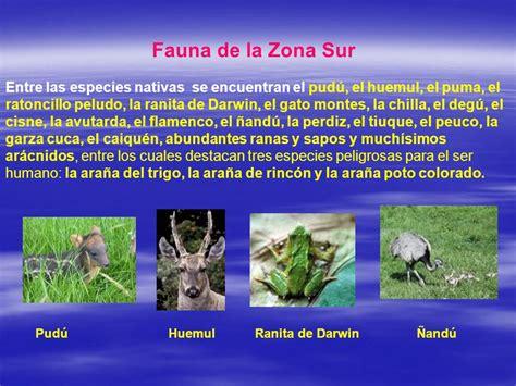 fauna de la zona sur chile en imagenes fotos animales zona sur de chile los recursos naturales