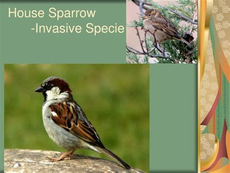 ppt common bird identification powerpoint presentation