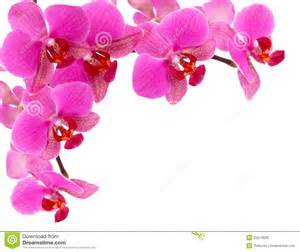 orchid frame royalty free stock photo image 25574625