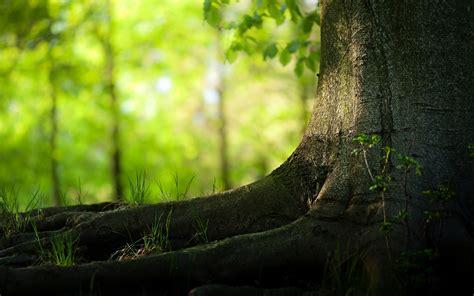 pretty walls download beautiful trees hd wallpapers free fondos para tu nuevo windows 10 im 225 genes taringa