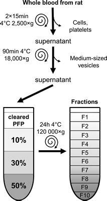 Frontiers | Isolation of High-Purity Extracellular