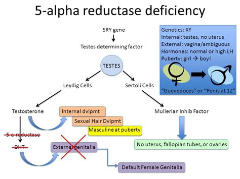 how to naturally stop 5 alpha reductase type 2 5 alpha reductase inhibitors part 1 prostate health 5
