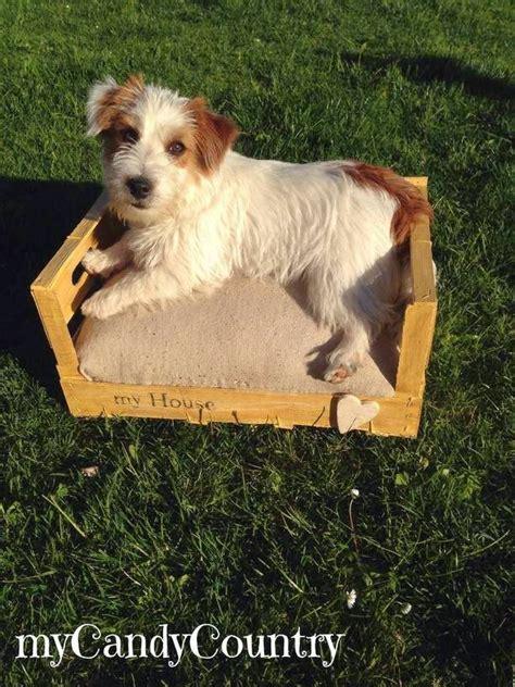 cassetta gatto creare cuccia per cani o gatto da una cassetta di legno