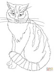 chinese cat coloring page chinese mountain cat coloring page free printable