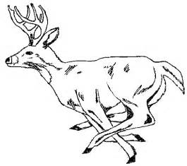 Free printable animal deer coloring sheet pictures cartoon coloring