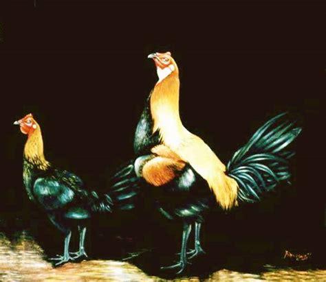 la navaja peruana gallos de pelea gallos peruanos gallos untitled document www gallospedragliofarm com