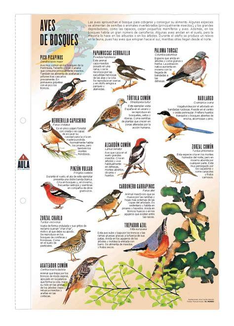 imagenes de laminas escolares l 225 minas escolares aves de los bosques taringa