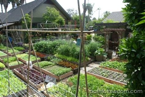 Backyard Homesteading by Allotment Inspiration Phenomenal Crop Yield From Just
