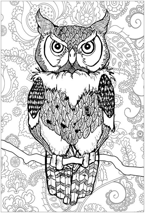 Piercing eyes owl with background - Owls Adult Coloring Pages