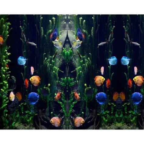 Folie Aquarium Kleben by Fototapete Quot Aquarium Quot Nach Ma 223 R Rabanus